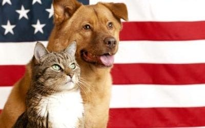 Spay Pets for the Military