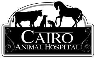 2014 Veterinarian of the Year: Cairo Animal Hospital